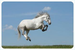 Лошадь в прыжке, в полёте