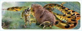 Кармический год для Крыса: пакости Обезьян