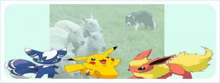 Бордер-колли гипнотизирует овец. И покемонов?